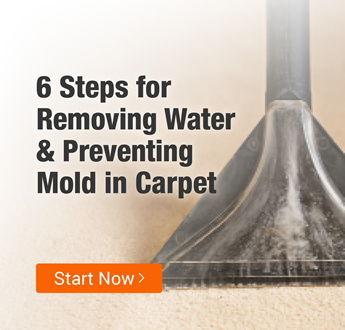Carpet Mold Prevention